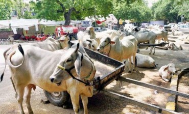 Beef ban for Bangladesh to stop attle smuggling
